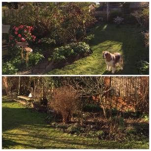 Garden Maintenance and Tidy Up