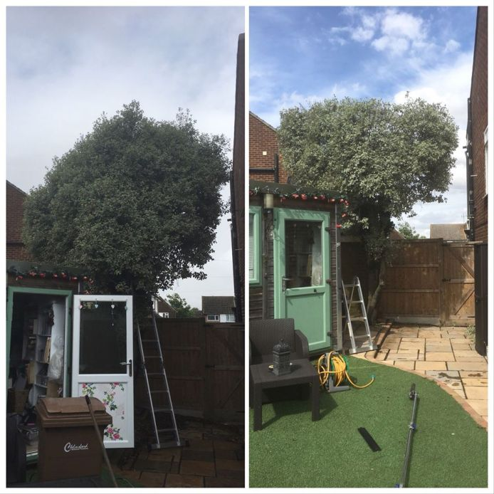 Tree Cutting and Pruning