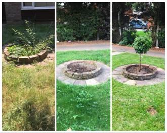 Garden Maintenance and Planting