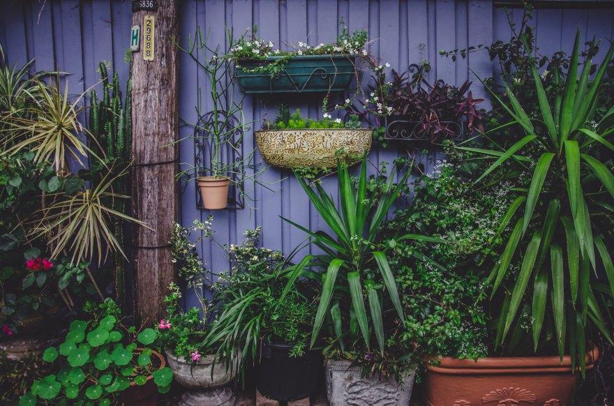 Top Patio Plants - Gardener in Chelmsford